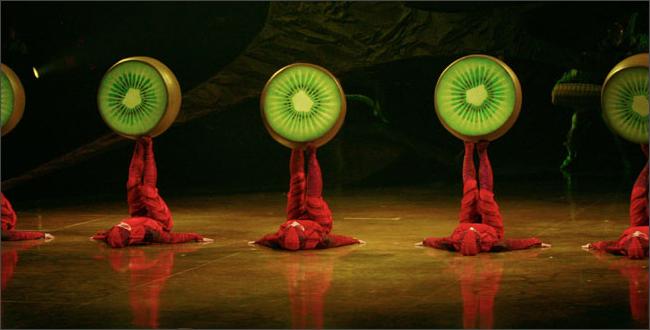 OVO ANTS
